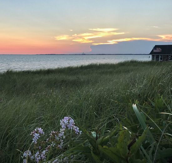 Sea Nature Tranquility Tranquil Scene Horizon Over Water Beauty In Nature Grass Sunset Scenics Water Beach Sky Outdoors Idyllic No People Growth Landscape Day sunset over Provincetown from north truro