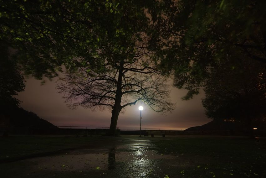 Tree Nature Beauty In Nature Night Scenics Tranquility Outdoors Tranquil Scene Silhouette Water No People Branch Landscape Lake Sky Wallpaper Homepage