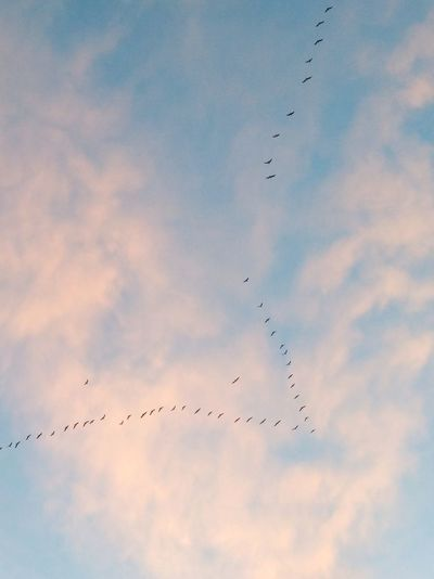 La naturaleza nos regala en otoño momentos como este ⏺️ Nature gives us moments like this in autumn Nature Naturaleza Pajaros Birds Flying Large Group Of Animals Autumn Otoño Animal Migration Sky Cielo Clouds Nubes