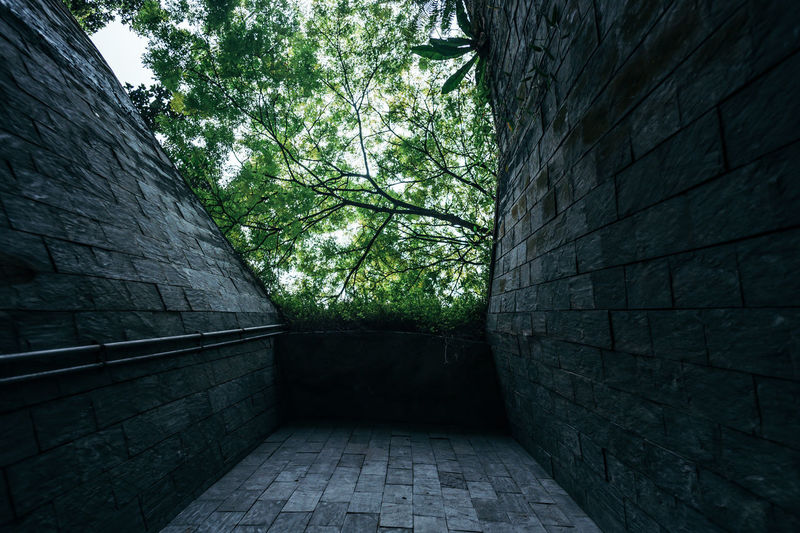 Nature tunnel The Architect - 2018 EyeEm Awards Architecture Brick Building Building Exterior Built Structure Direction Nature Outdoors Park Plant Stone Wall The Way Forward Tree Tunnel Wall Wall - Building Feature The Creative - 2018 EyeEm Awards
