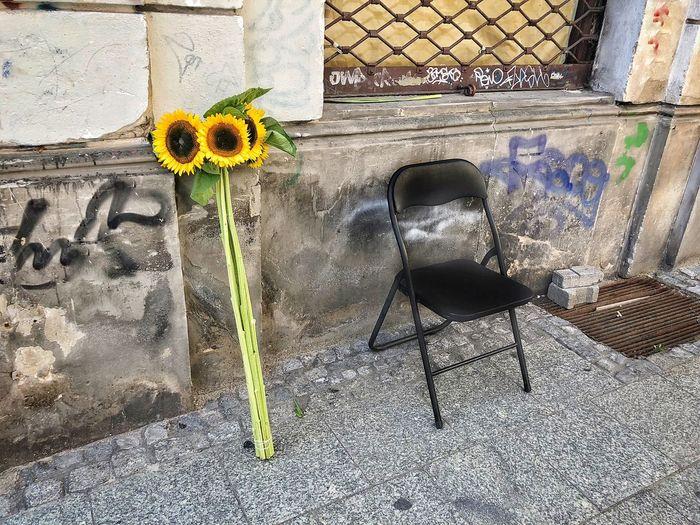 Warsaw Vibes Słonecznik Sunflowers Sonnenblumen Sonnenblume 🌻 Sonnenblume Flower Vendor Sunflower🌻 Warsaw Street Streets Of Warsaw Warschau Warszawa  Nowy Świat Flower Shadow Sunlight Nature Day Vulnerability  Graffiti Yellow