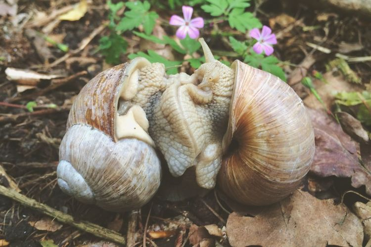 Nature On Your Doorstep First Eyeem Photo Wald Nature Schnecke Naturelovers Nature_collection Beautiful Nature Holsteinische Schweiz Malente
