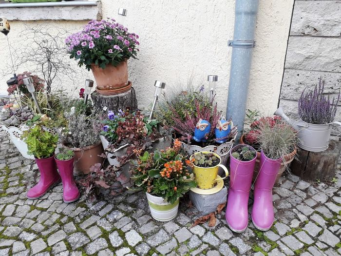 Potted plants on footpath against building