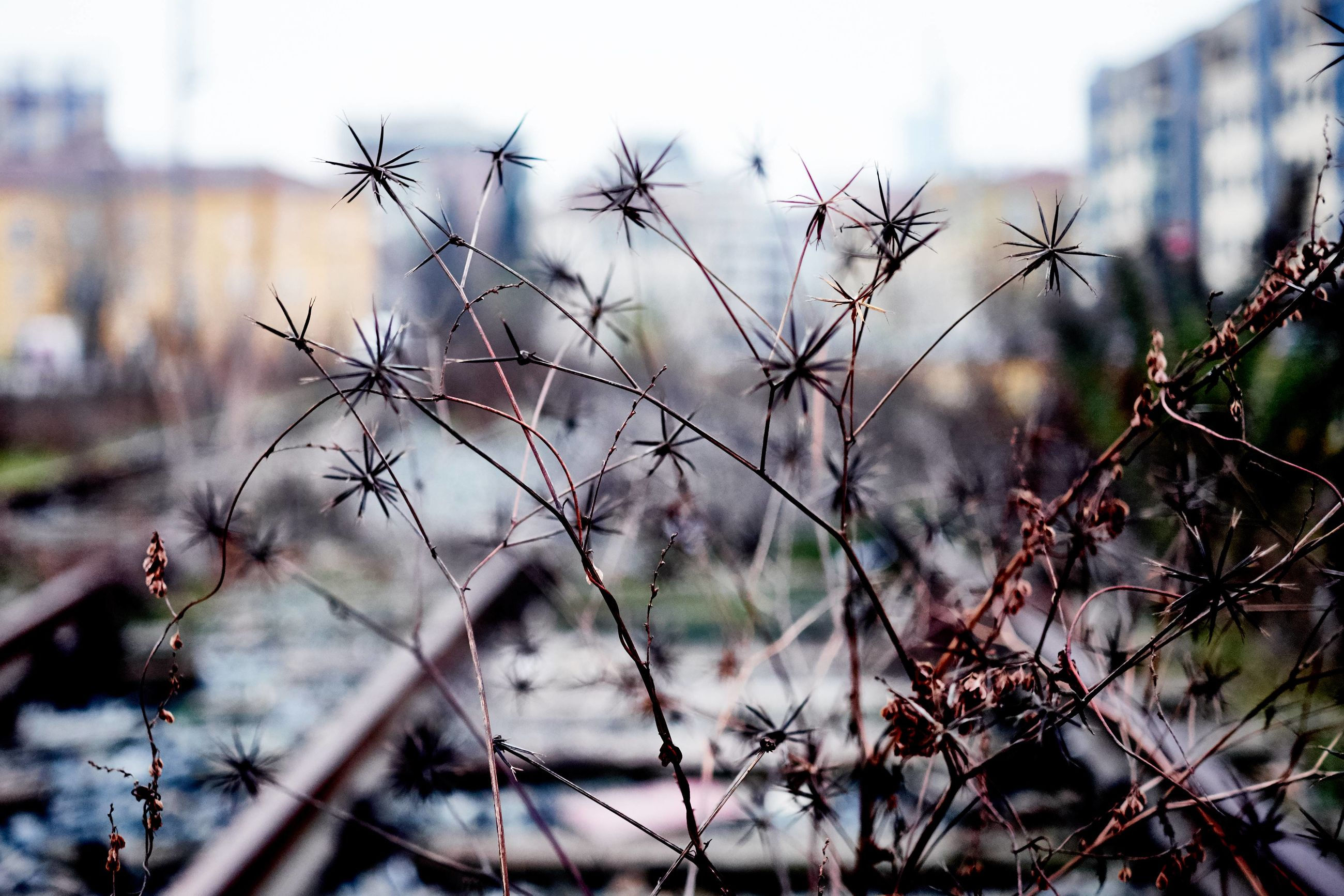 focus on foreground, nature, plant, close-up, outdoors, no people, beauty in nature, winter, tree, sunset, growth, branch, landscape, day, sky