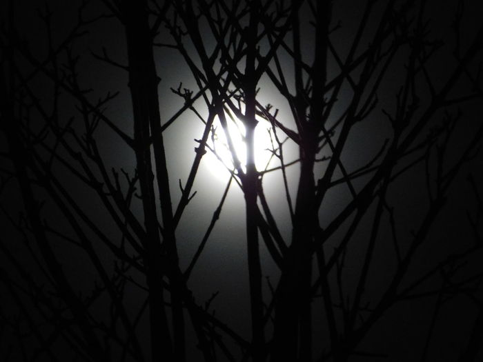 Branches in Moonlight Atmosphere Bare Tree Branch Glowing Moon Silhouette Moonlight No People Outdoors Sillouette Twig