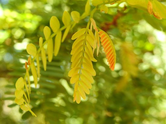 Yellow leaf. Background Blur Background Bokeh Leaves Yellow Leaves Yellow Leaf Tree Leaf Branch