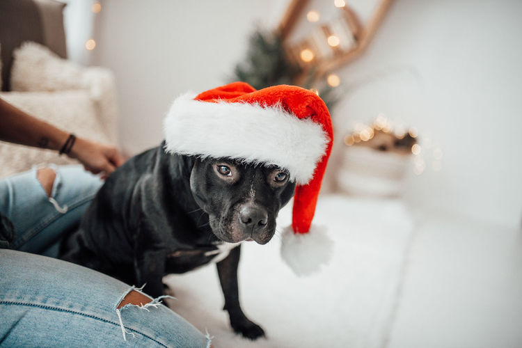 Dog looking away in a christmas tree