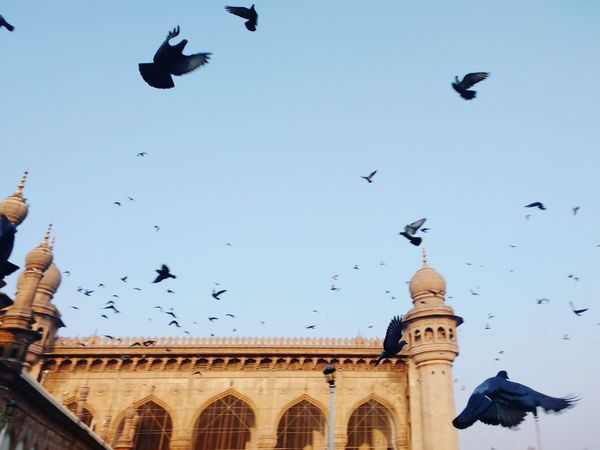 Jamma masjid Bird Flying Large Group Of Animals Flock Of Birds City Sky Architecture Travel Destinations Outdoors Animal Themes Built Structure No People Clear Sky History Building Exterior Animals In The Wild Dome Day Long Goodbye EyeEmNewHere Welcome To Black Live For The Story