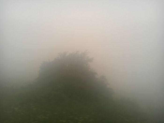 Smog Mog Fog