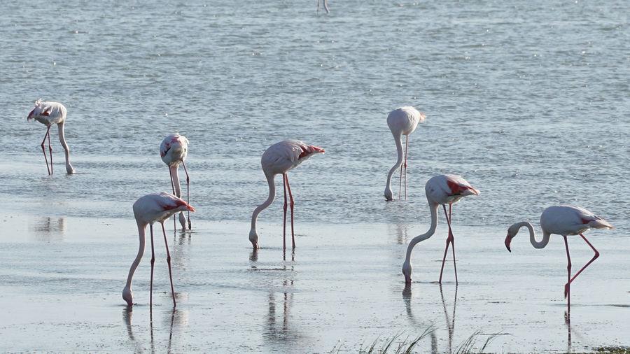 Birds in the lake