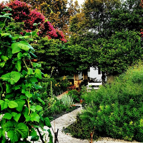 My secret place. GuramsEye Plant Nature Day Flower Green Tranquility Outdoors Tree Garden Colonial Williamsburg Virginia Bench Love God Peace Quiet Beautiful Path Now New Life First Eyeem Photo TakeoverContrast