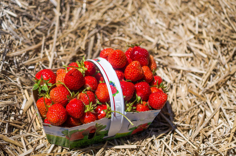 High Angle View Of Strawberries In Paper Basket On Twigs