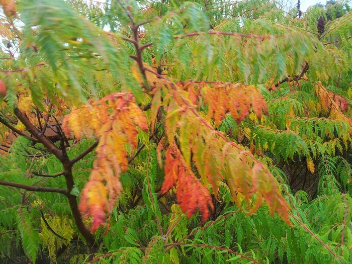 Nature Colors Autumn TheMinimals (less Edit Juxt Photography) Nature Makes Me Smile
