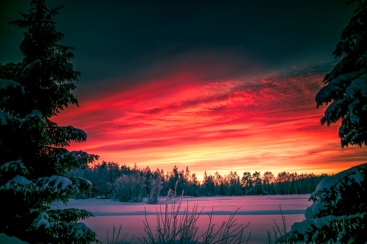 Skies on fire Tree Beauty In Nature Winter Sunset Cold Temperature Sky Scenics - Nature Snow Tranquility Tranquil Scene Nature No People Landscape Cloud - Sky Outdoors Nature_collection Photography Sunlight Field Hello World Freshness Check This Out Taking Photos Colors Scenics
