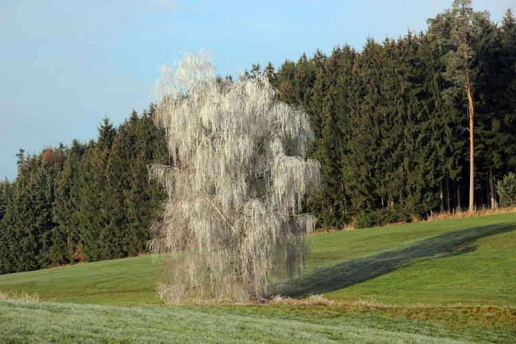 Tree Land Scenics - Nature Beauty In Nature Green Color Frosty Mornings Nature Plant