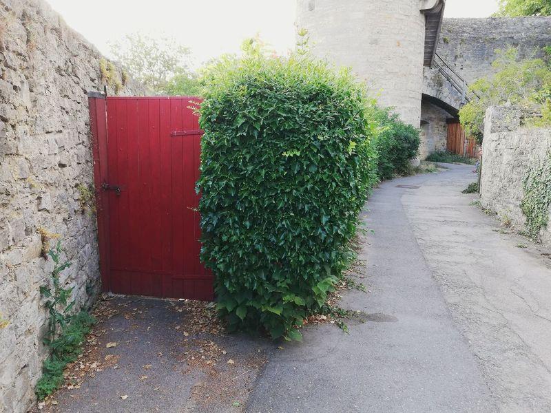 Growing Closed Door Front Door