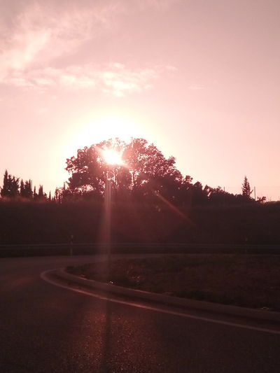 No People Tree Outdoors Sunset Pinaceae Forest Nature Road Day Beauty In Nature Sky Pixelated Freshness