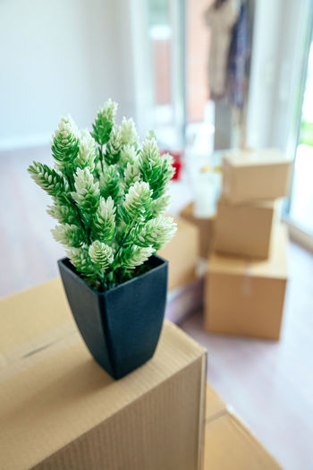 Moving with plant and stacked boxes at new home Architecture Box Decor Modern Moving Apartment Boxes Cutter Design Empty Estate Furniture Home Interior House Living Room Luxury Meter Move New Home Nobody Relocation Space Spacious Style Vertical