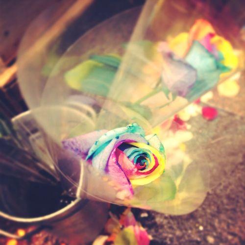 Rainbow☆