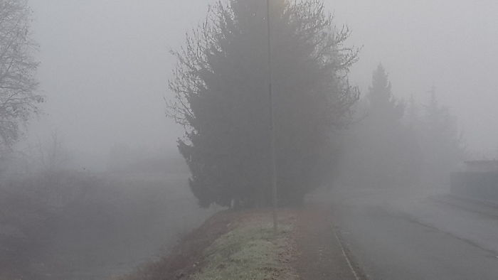 Fog Tree Weather Tranquility Nature Winter Beauty In Nature Cold Temperature Forest Outdoors No People Scenics Day Landscape Sky
