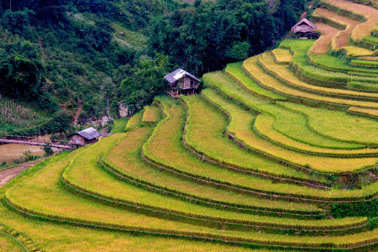 The rice terrace and some small huts in the ladder Plant Landscape Agriculture Mountain Growth Rice Paddy Rice - Cereal Plant Rural Scene Environment Scenics - Nature Terraced Field Terrace Land Nature Curve Rice Farm Valley Crop  Field Gardening No People Outdoors Mu Cang Chai Vietnam Rice Paddy Rice Terrace Rice Terraces Hut Green Color