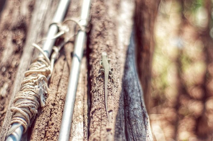 Nature's Diversities Lizard Lizard Love Countryside Reptile Country Life