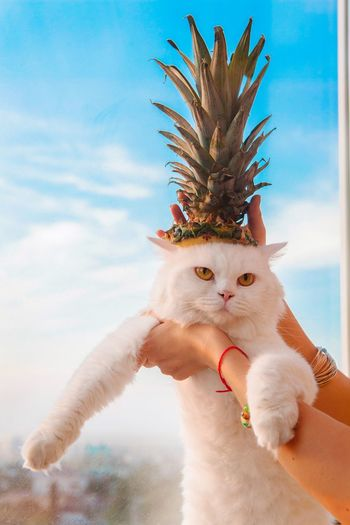 Cropped Hands Of Woman Holding Cat With Pineapple Leaves