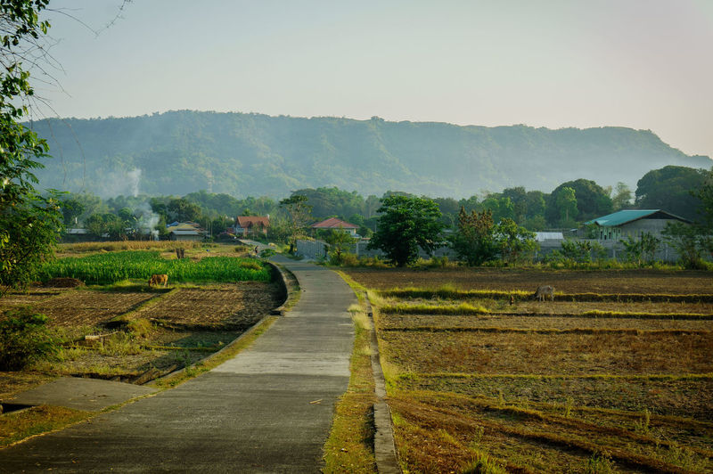 La Union Rural EyeEmNewHere Agriculture Beauty In Nature Day Direction Environment Field Growth Land Landscape Mountain Nature No People Outdoors Plant Road Scenics - Nature Sky The Way Forward Tranquil Scene Tranquility Tree