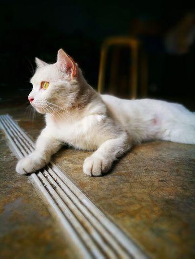My Lovely Cat ^