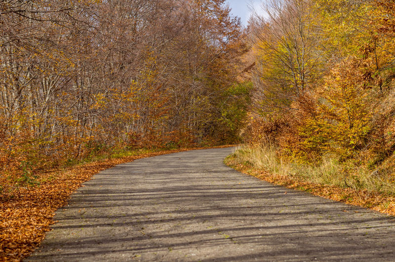 Asphalt Autumn