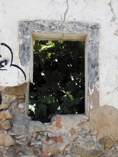 No People Window Plant Architecture Day Indoors  Built Structure Close-up Building Exterior Ruins Architecture Outdoors House Ruins Architecture Ruins_photography Ruins Of A Past Ruins Still Beautiful Ruins Snapshot Ruins Of Building Ruins House Ruins&Misery Ruinss Ruins In Ocean Ruins And Trees Grass Tree