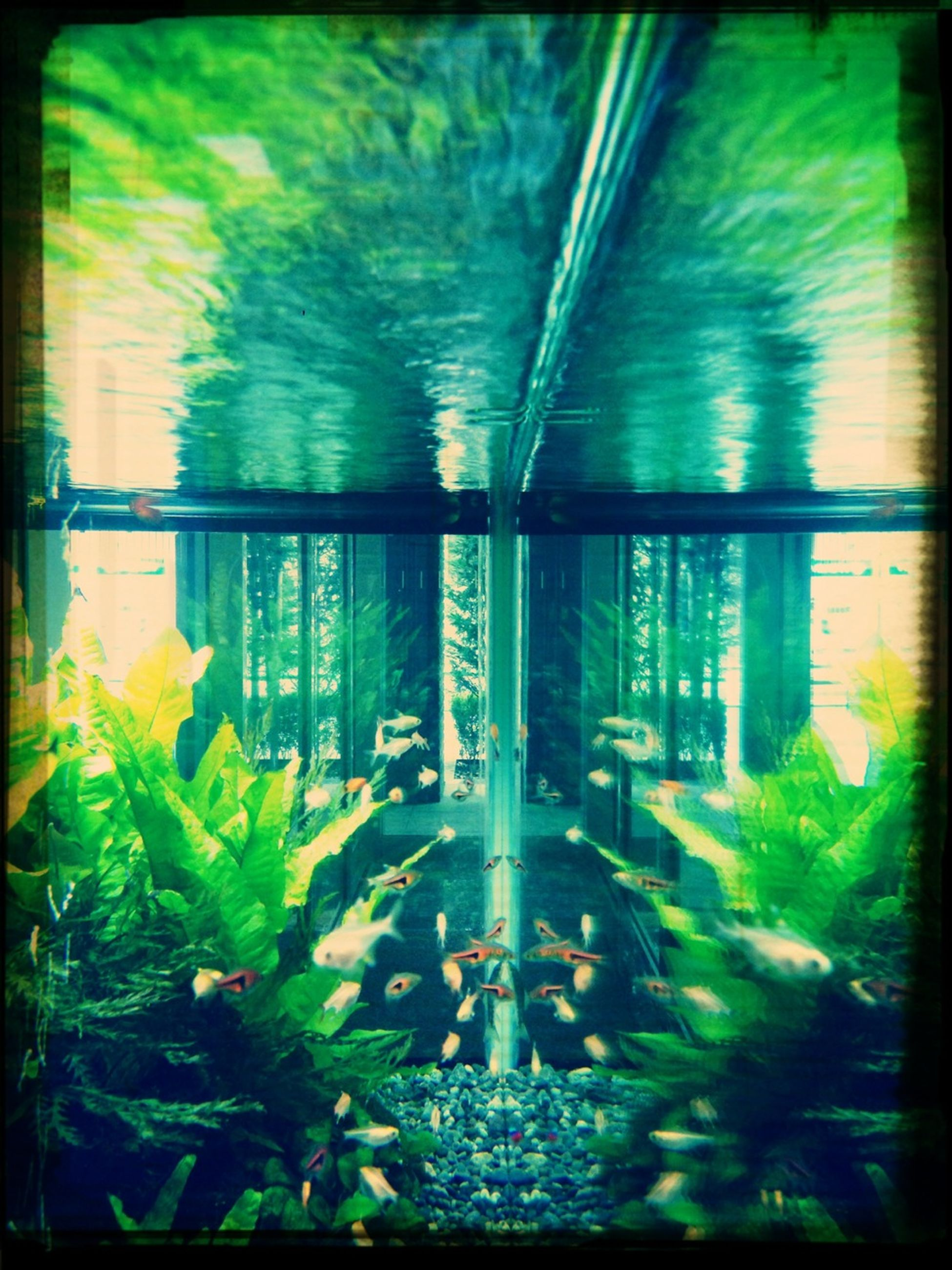transfer print, auto post production filter, water, architecture, built structure, indoors, reflection, window, building exterior, glass - material, no people, plant, sunlight, green color, transparent, day, nature, growth, high angle view