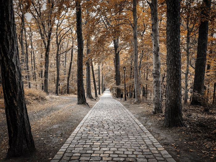 Straight path between autumn forest Sadness Autumn Collection Autumn Leaves Autumn colors Autumn Tree The Way Forward Direction No People Plant Nature Footpath Cobblestone Forest Outdoors Diminishing Perspective Beauty In Nature Day