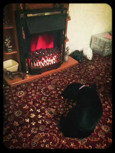 Zara in front of the fire :)