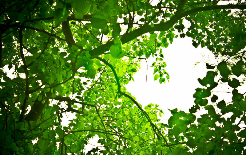 Beauty In Nature Botany Branch Calm Green Green Color Growing Leaf Leaves Love Loveit Lovely Low Angle View Lush Foliage Nature Pacs Peace Plant Scenics Sky Tranquil Scene Tranquility Tree Twig