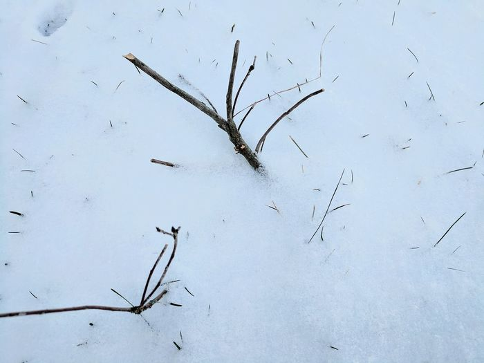 Nature Close-up Beauty In Nature Limb In Snow No People Day Outdoors Cold Temperature Snowflake Shades Of Winter