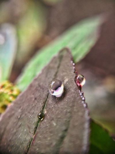 Dew Macro