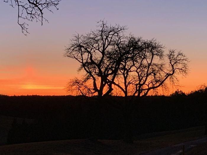 Silhouette bare tree on field against orange sky