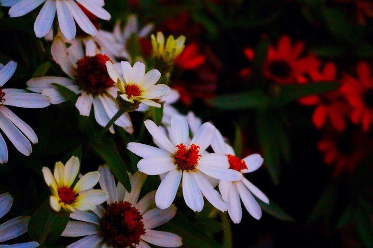 Full frame shot of bright flowers