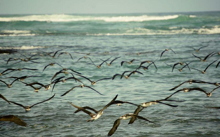 Horizonte! Mar Azul Gris Horizonte Vuelo Pajaro Oversea Colors Galapagos Moments Flying