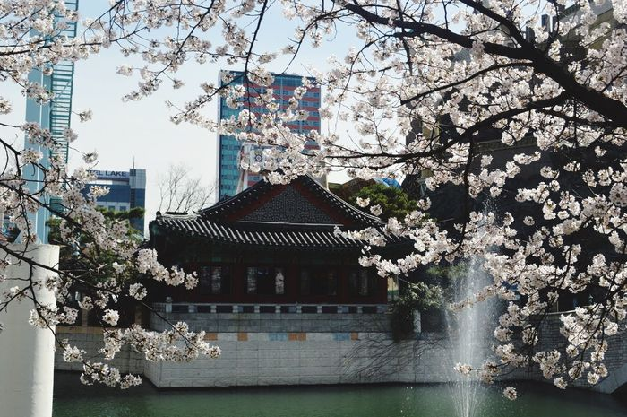 Built Structure Tree Architecture Building Exterior Growth No People Branch Nature Outdoors Flower Day Water Sky Beauty In Nature Seoul Seoul, Korea Sakura Korean House Korea EyeEmNewHere The Great Outdoors - 2017 EyeEm Awards