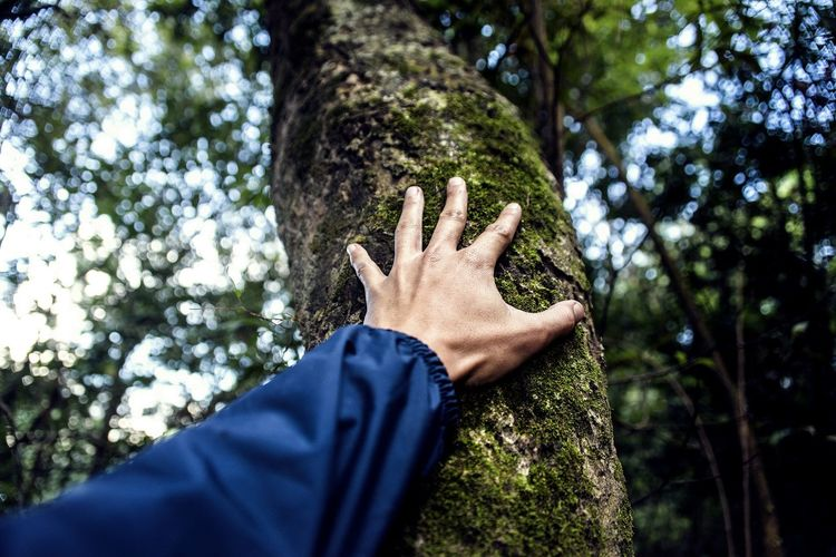 Low angle view of person hand against tree trunk in forest