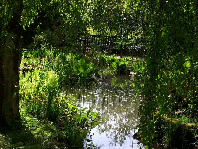 Didsbury Fletcher Moss Japanese Garden Green Color Eyem Nature Lovers  Colours Of Nature Walking Around Scenic View