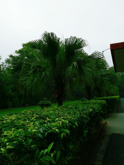Green Color Outdoors Nature Beauty In Nature Water Sky Growth Palm Tree Tree Day No People