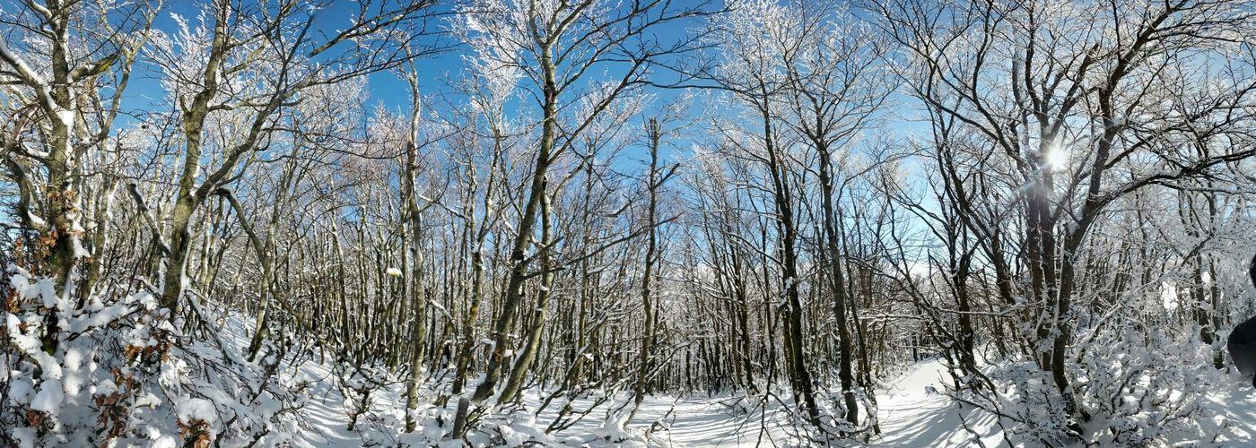 Snow Neve
