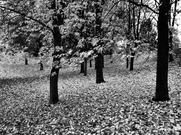 Fall Beauty Black & White