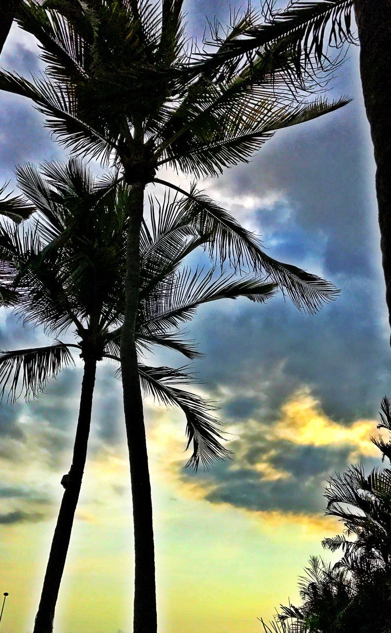 tree, palm tree, low angle view, tree trunk, sky, growth, nature, beauty in nature, no people, outdoors, palm frond, scenics, silhouette, branch, cloud - sky, day, sunset