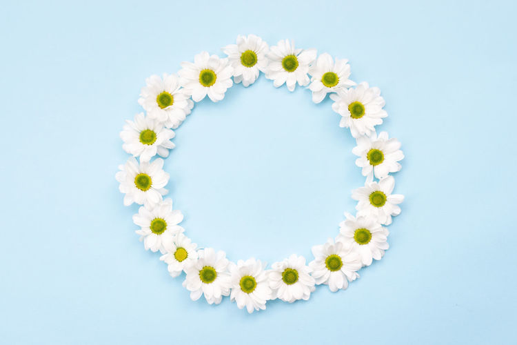 Close-up of white daisy against blue background