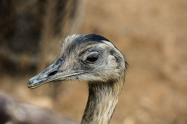 Animal Eye Animal Themes Animal Wildlife Animals In The Wild Beak Beauty In Nature Bird Close-up Day Focus On Foreground No People One Animal Outdoors