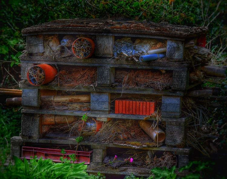 Taking Photos HDR Collection Zoo Chester Zoo Photography Insects  Insect Nest